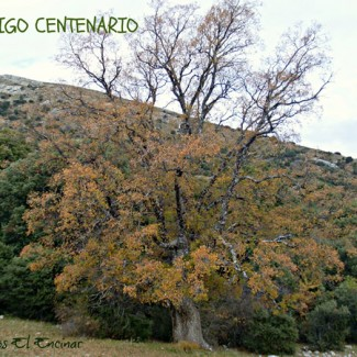 sierra_magina_g_16